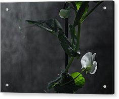 Lone Petal Wall Art Acrylic Print by Chris Fletcher