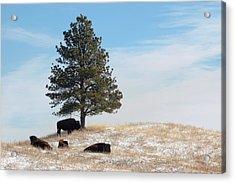 Lone Pine Acrylic Print