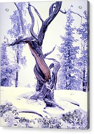Lone Pine Acrylic Print by Ray Mathis
