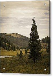Lone Pine Acrylic Print by Wayne Meyer