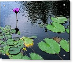 Lone Pond Lily Acrylic Print by Dawn Romine