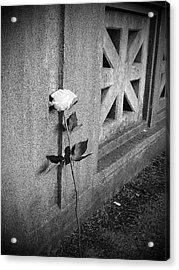 Lone Rose Acrylic Print by HW Kateley