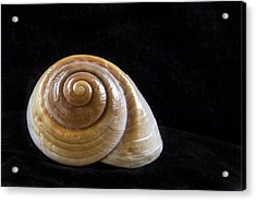Lone Shell Acrylic Print by Jean Noren