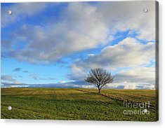 Lone Tree At Epsom Downs Uk Acrylic Print