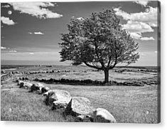 Lone Tree In Maine Blueberry Field Acrylic Print