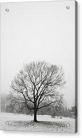 Acrylic Print featuring the photograph Lone Tree In Snow by Ed Cilley