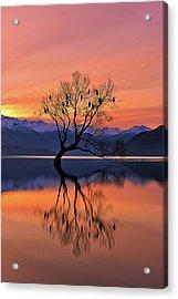 Lone Tree Is Not Lonely Acrylic Print by Mei Xu