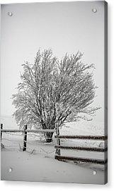 Lone Tree Acrylic Print by John Haldane