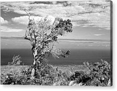 Lone Tree Acrylic Print by Max Ratchkauskas