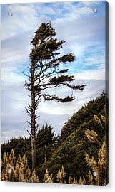 Lone Tree Acrylic Print by Melanie Lankford Photography