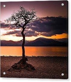 Lone Tree Of Loch Lomond Acrylic Print