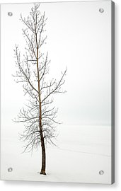 Lone Tree On The Ottawa River Shoreline Acrylic Print