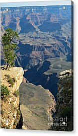 Lone Tree Overlooking The Edge Of The Grand Canyon National Park Vertical Acrylic Print by Shawn O'Brien