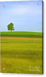 Lone Tree Acrylic Print by Rima Biswas