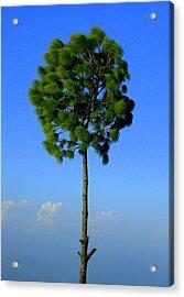 Lone Tree Acrylic Print by Salman Ravish