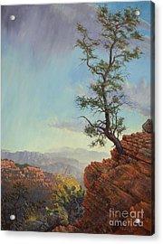 Lone Tree Struggle Acrylic Print
