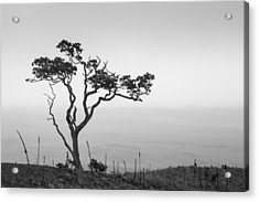Lone Tree Acrylic Print by Takeshi Okada