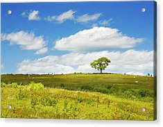 Lone Tree With Blue Sky In Blueberry Field Maine Photograph  Acrylic Print
