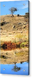 Acrylic Print featuring the photograph Lone Tree With Reflection by David Rich