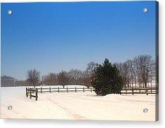 Lone Winter Evergreen  Acrylic Print