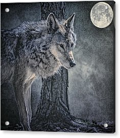 Acrylic Print featuring the photograph Lone Wolf by Brian Tarr