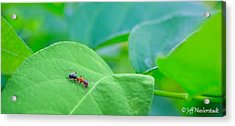 Lonely Ant Acrylic Print