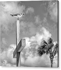 Lonely At The Top Acrylic Print by Lynn Palmer