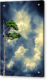 Lonely Bonsai Acrylic Print by John Haldane