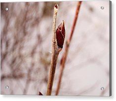 Acrylic Print featuring the photograph Lonely Bud by Zinvolle Art