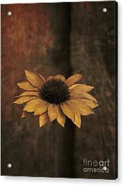 Acrylic Print featuring the photograph Lonely Coneflower by Marjorie Imbeau