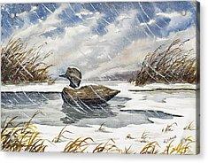 Lonely Decoy In Snow Acrylic Print by Raymond Edmonds