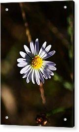 Lonely Flower Acrylic Print by Phillip Segura