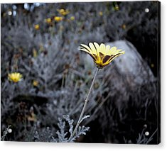 Lonely Flower Acrylic Print