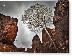 Lonely Gum Tree Acrylic Print by Dirk Ercken