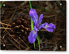 Acrylic Print featuring the photograph Lonely Iris by Richard Stephen