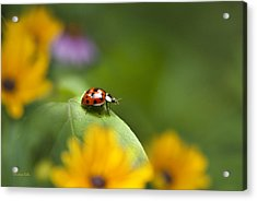 Acrylic Print featuring the photograph Lonely Ladybug by Christina Rollo