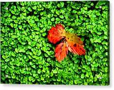 Acrylic Print featuring the photograph Lonely Leaf by Charlie and Norma Brock