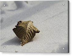 Lonely Leaf Acrylic Print by Joel Venzke
