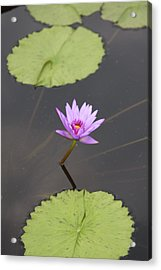 Lonely Lily Acrylic Print by Vadim Levin