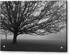 Acrylic Print featuring the photograph Lonely Low Tree by Maj Seda
