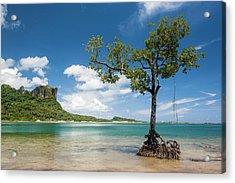 Lonely Mangrove Tree Standing Acrylic Print