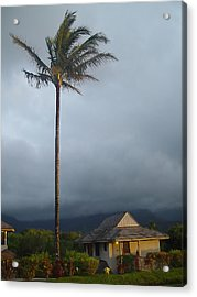 Lonely Palm Acrylic Print