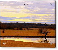 Lonely Pond Acrylic Print
