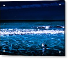 Lonely Seagull Acrylic Print