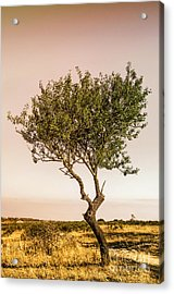 Lonely Tree Acrylic Print