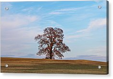 Lonely Tree Acrylic Print by Cynthia Guinn