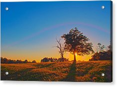 Acrylic Print featuring the photograph Lonely Tree On Farmland At Sunset by Alex Grichenko