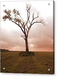 Acrylic Print featuring the photograph Lonely Tree by Ricky L Jones