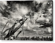 Lonely Tree Roots Reaching For The Sky Acrylic Print
