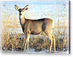 Acrylic Print featuring the photograph Lonesome Doe Sunset by Barbara Chichester